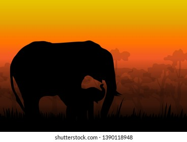 The nature of elephants and baby elephants at dusk and the beautiful atmosphere.