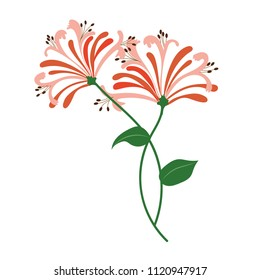 Nature flower orange honeysuckle, vector botanic garden floral leaf plant.