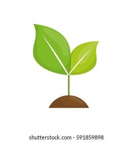 Nature green plant icon vector illustration graphic design