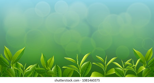 nature leaves green tea on spring  background. vector design illustrator.