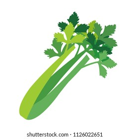Nature organic vegetable Celery, healthy vector colorful food vegetable spice ingredient.