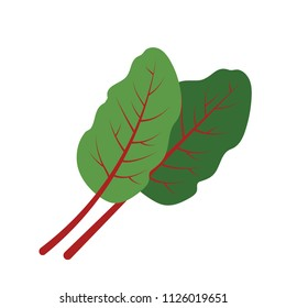 Nature organic vegetable Mangold Swiss chard leaf, healthy vector colorful food vegetable spice ingredient.