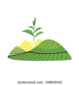 Nature tea plant field vector.