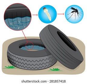 Nature, tires with stagnant water with fly breeding mosquitoes. Ideal for informational and institutional sanitation and related care