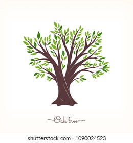Nature. Vector silhouette oak tree on white background. Organic food.