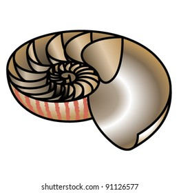 A nautilus shell cut in half to reveal the growth chambers and spiral.