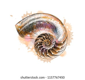 Nautilus shell section from a splash of watercolor, hand drawn sketch. Vector illustration of paints