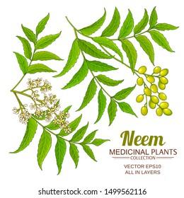 neem vector set on white background