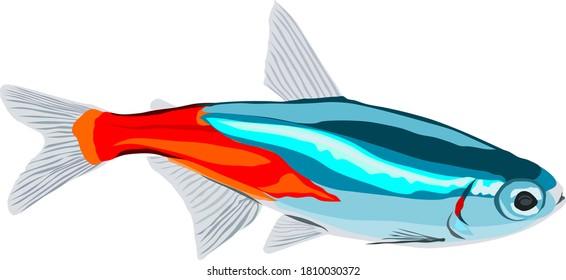 Neon Tetra fish vector on white background