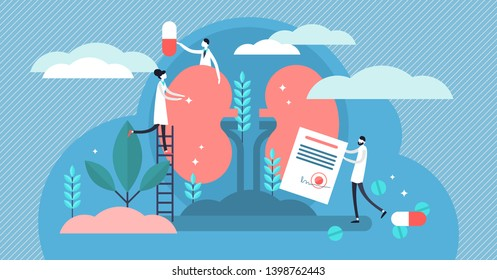 Nephrology vector illustration. Flat tiny kidney healthcare persons concept. Abstract anatomical and medical inner organs disease treatment. Pharmacy research system and educational physiology study.