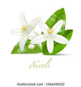 Neroli Flowers and Leaves. Realistic Blossom Plant for Labels of Cosmetic Skin Care Product Design. Vector Isolated Illustration