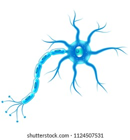 Nerve cells isolated on white photo realistic vector