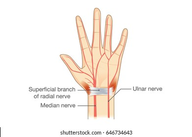 nerves hand vector style illustration 260nw 646734643 royalty free hand nerves stock images, photos & vectors shutterstock