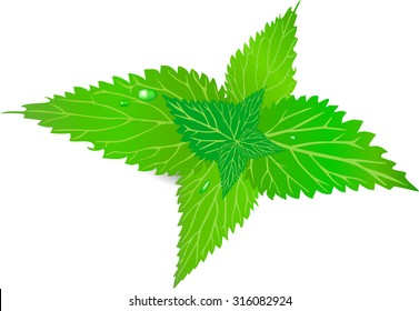 The nettle with leaves, a green grass, burning leaves,  white color, green color, has curative properties, weeds, a garden nettle, a bunch of leaves, wild botany, causes a burn