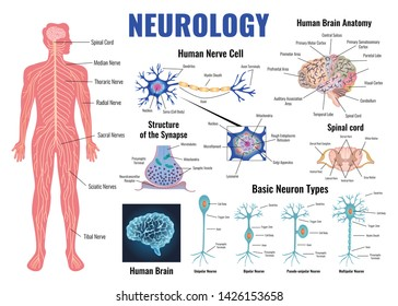 Neurology and human brain anatomy set flat isolated vector illustration