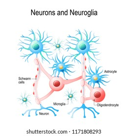 Neurons and non-neuronal cells in brain (oligodendrocyte, microglia, astrocytes and Schwann cells). Vector diagram for educational, medical, biological and science use