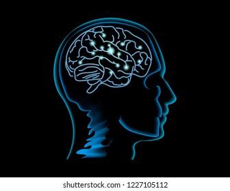 Neuroscience. Human brain vector