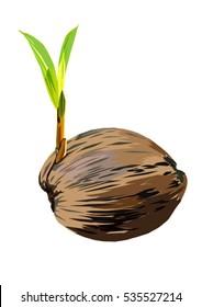 New Born  Coconut