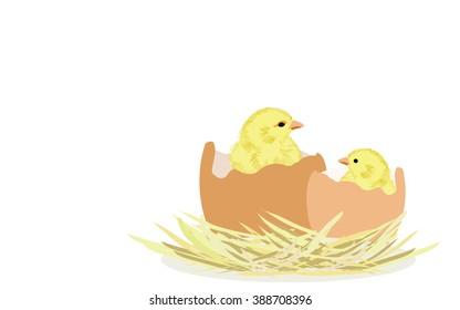Newborn chicks in eggs