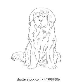 Newfoundland Dog Images Stock Photos Vectors Shutterstock