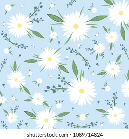 Nice chamomile on the blue background