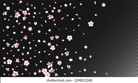 Nice Sakura Blossom Isolated Vector. Spring Blowing 3d Petals Wedding Paper. Japanese Nature Flowers Wallpaper. Valentine, Mother's Day Tender Nice Sakura Blossom Isolated on Black
