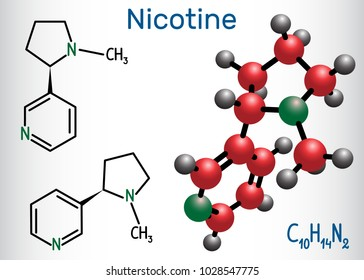 Nicotine molecule, is alkaloid , found in the nightshade family of plants. Structural chemical formula and molecule model. Vector illustration