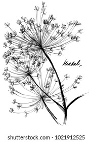 Nifty gentle hand drawn botanical stalk. Vintage nature element for visit card or wedding invitation. Stylish flower, fancy blossom. Black line botanical motiv. Herbal culm.