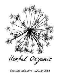 Nifty gentle hand drawn botanical stalk. Vintage nature element for visit card or wedding invitation. Stylish flower, fancy blossom. Black line botanical motiv. Herbal culm. Organic dandellion bud