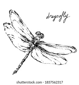 Nifty gentle hand drawn dragonfly. Vintage nature element for visit card or wedding invitation. Stylish insect, fancy fly. Black line motiv. Herbal Ink fauna