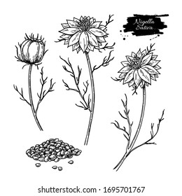 Nigella sativa vector drawing. Black cumin isolated illustration. Hand drawn botanical flower branches and seeds. Vintage engraved oil ingredient. Sketch of medicinal herb.