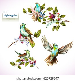 Nightingale on branches with leaves. Set of four birds. Hand drawn, watercolor. All objects are separated and easy to move. Vector - stock