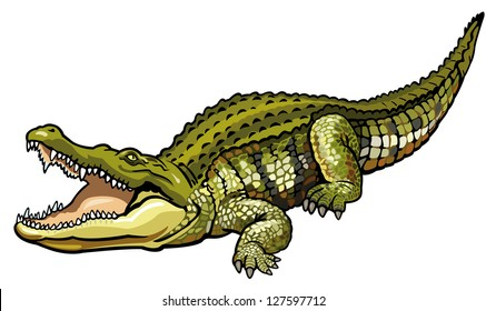 nile crocodile,crocodylus niloticus,wild african animal,side view picture isolated on white background,vector illustration
