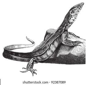 Nile monitor (Varanus niloticus) / vintage illustration from Meyers Konversations-Lexikon 1897