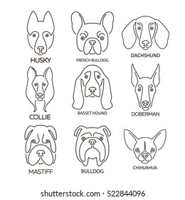 Nine thin line design logotypes. Vector image of dog heads on white background. Cute dogs, face of mastiff, french bulldog, dachshund, husky, basset hound, doberman, chihuahua, collie.