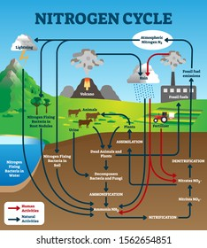 Nitrogen cycle vector illustration. Labeled educational natural chemical scheme. Graphic with human and natural activities as part of earth life ecosystem. Model with assimilation and nitrification.