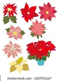 Nochebuena Flores Rojas