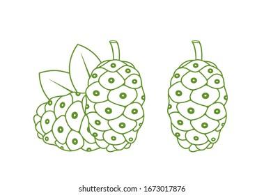 Noni fruit outline. Isolated noni fruit on white background