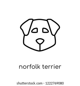 Norfolk Terrier dog icon. Trendy modern flat linear vector Norfolk Terrier dog icon on white background from thin line dogs collection, editable outline stroke vector illustration