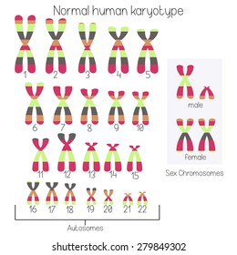 Normal human karyotype chromosome idiogram