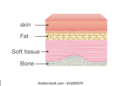 Normal Skin Anatomy of Human. Ideal for medical Illustration and science.