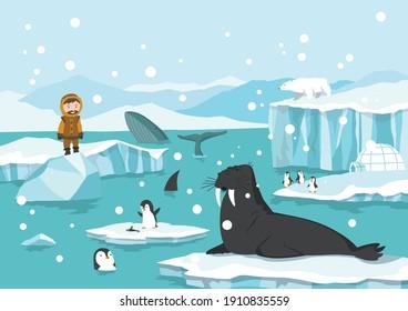 North pole arctic. White bears, seal and penguins on drifting and melting glacier in ocean, snow mountains iceberg polar winter season cartoon vector illustration