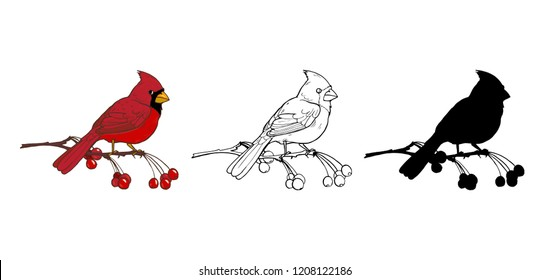 Northern cardinal, a bird of the family of finches, color, black and white image and silhouette on a white background, vector illustration