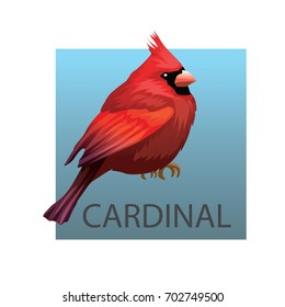 Northern Cardinal bird on a white background. Vector illustration isolated birds. Red bird, Animals, bird silhouette, bird vector