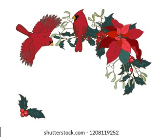 Northern cardinal, Finch family birds, Holly and poinsettia branches, vector illustration