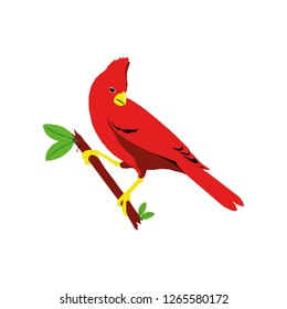 Northern Cardinal icon vector symbol isolated. Vector illustration. Vector icon illustration isolated on white background.