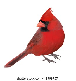 Northern Cardinal portrait - Cardinalis cardinalis. Hand drawn vector illustration of a male Northern cardinal showing off its beautiful red plumage.Transparent background, realistic representation.