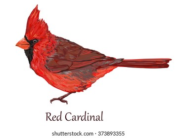 Northern cardinal, Red Cardinal bird, vector illustration art bird, wildlife, animal. (Cardinalis cardinalis)