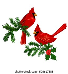 Northern cardinal, Red Cardinal bird, vector illustration bird, wildlife. Hand Drawn Vector Illustration of bird. Winter illustration. Birds sitting on a tree.