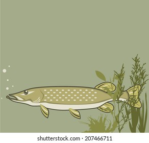 Northern Pike Vector